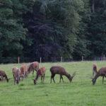 animali presso il Castello di Blair, Scozia